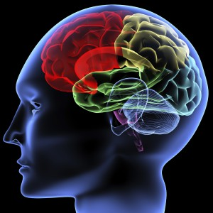 Brain, concussion, ImPACT™ Neurocognitive Testing